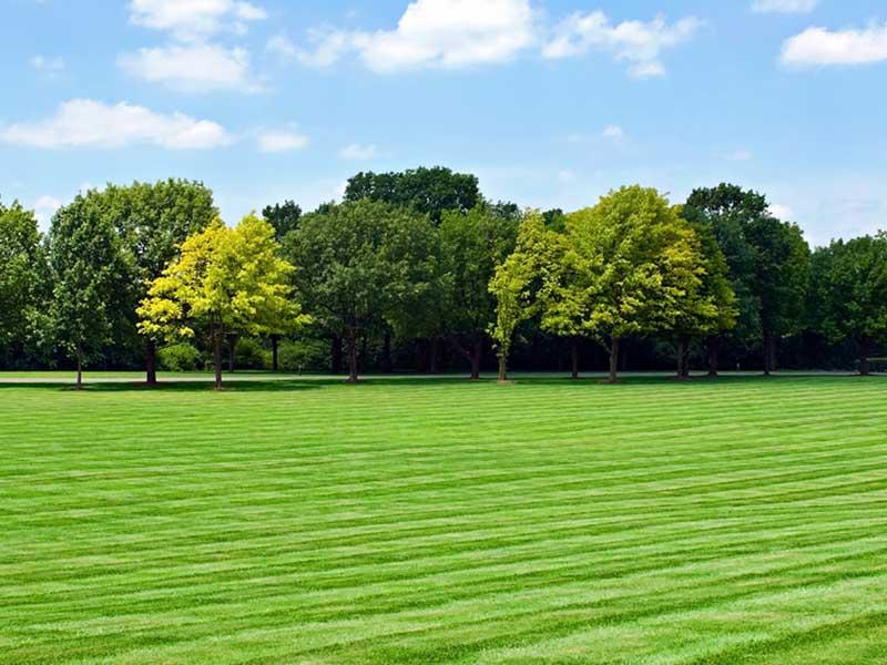 Landscaping Gardening Essex
